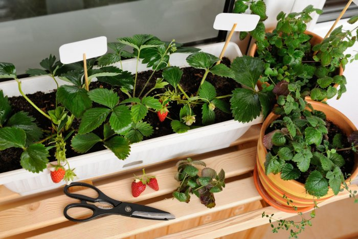 How to build a garden in 8 steps